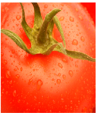 Fresh Fillaz|Fresh Tomato